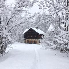 coulis hiver.jpeg
