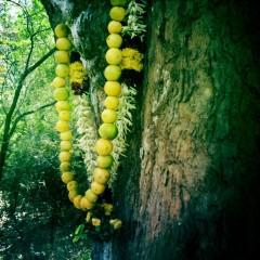 colier citrons.jpg